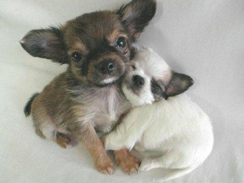 Doggie Cuddle
