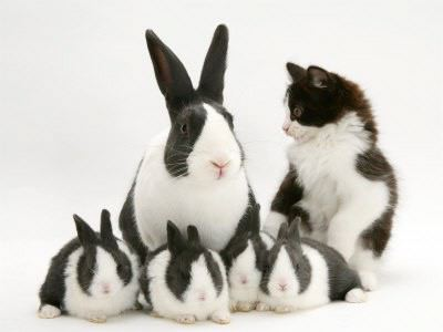 easter-bunny-and-cat